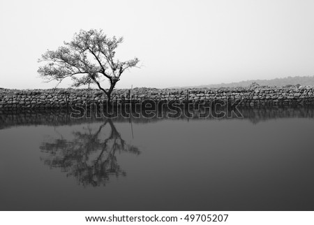 Alone tree reflected in the water. Monochrome black-and-white photo. Special artistic tones of the light and darkness - stock photo
