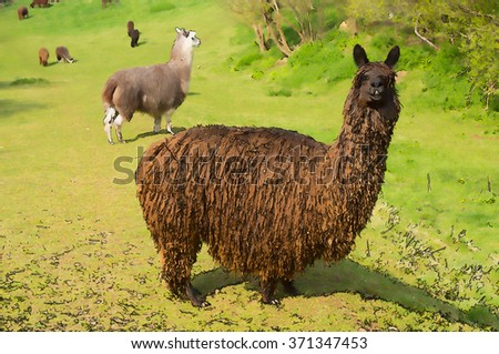 Alpaca hairy and brown Illustration of this animal like a llama unique and different like cartoon effect - stock photo