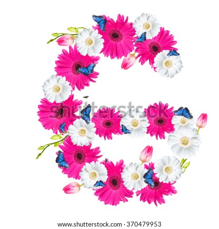Alphabet G, flower isolated on white background. Gerber, tulips and butterfly  - stock photo