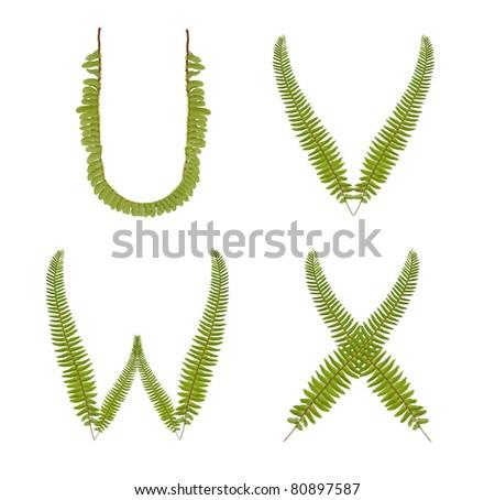 alphabet green fern set u-x - stock photo