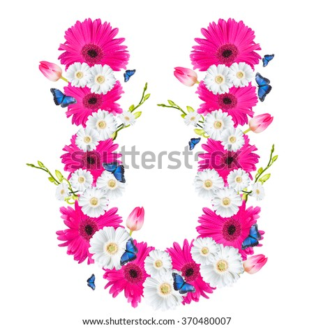 Alphabet U, flower isolated on white background. Gerber, tulips and butterfly  - stock photo