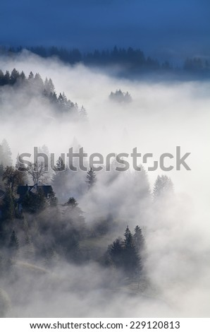 alpine forest and meadows in sunrise fog, Germany - stock photo