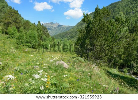 Alpine meadow covered with forest - stock photo
