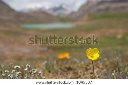 Alpine  meadow in the morning 4 - stock photo