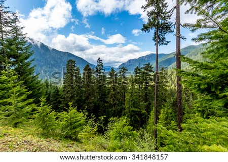 Alpine Meadow View of Mountain Valley Near Mount Rainier, Washington. - stock photo