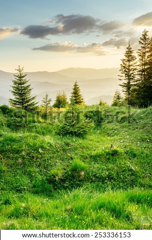 Alpine meadows in sunlight. Mountains at the background. Warmly lighted grass. Rich color range. Carpathians, Ukraine, Europe. - stock photo