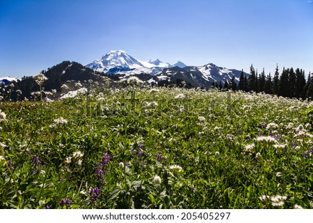 Alpine Meadows of Skyline Divide, Mount Baker, Washington  - stock photo