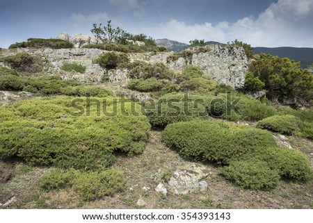 Alpine padded brushwood of Genista hispanica in Saliencia Valley, Somiedo Nature Reserve. It is located in the central area of the Cantabrian Mountains, Principality of Asturias in northern Spain - stock photo