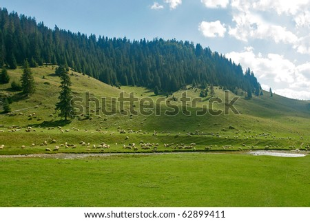 Alpine plain with hills and fir forest - stock photo