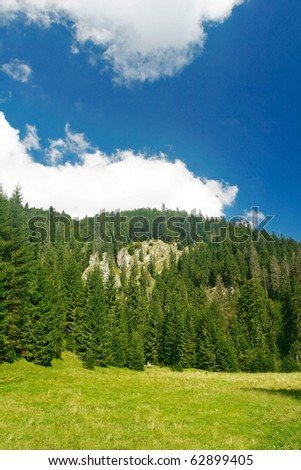 Alpine plain with hills and fir forests - stock photo