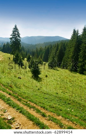 Alpine plateau with fir trees - stock photo