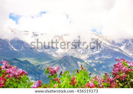 Alpine scenery. Blurry Lilac flowers shrubs at foreground and peaks of Alps mountains covered with snow and clouds in Provence-Alpes-Cote d'Azur region of France. Selective focus on the mountains.  - stock photo