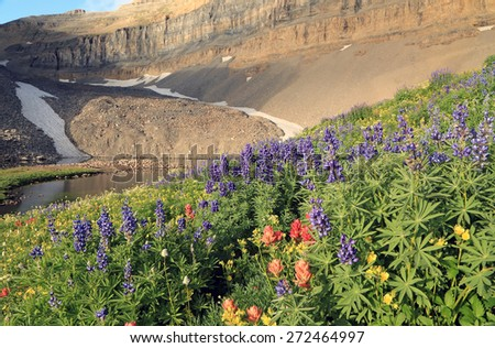 Alpine wildflowers, Utah, USA. - stock photo