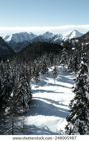 Alps - Alpine landscape with snowy fir trees. - stock photo