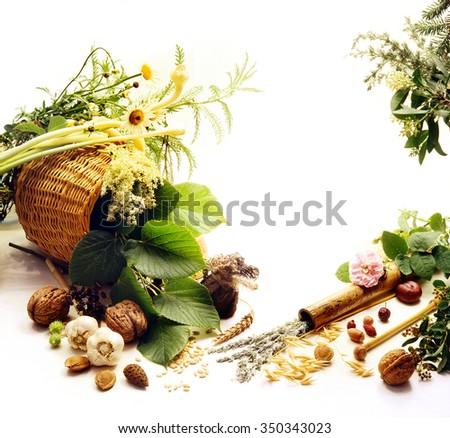 Alternative medicine.Drug plants  on a white background.Phytotherapy.  - stock photo