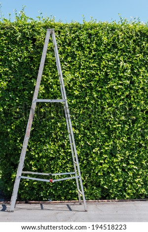 Aluminum ladder with wall green plant, - stock photo