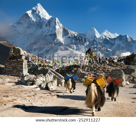 Ama Dablam with caravan of yaks and prayer flags - way to Mount Everest base camp - Sagarmatha national park - Nepal - stock photo