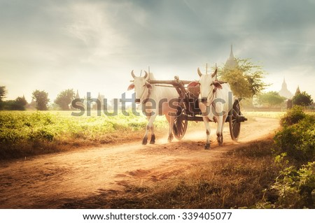 Amazing asian rural landscape with two white oxen pulling wooden cart with hay on dusty road at sunset. Bagan, Myanmar (Burma) - stock photo