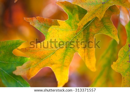 Amazing Colorful Autumn leaves background, soft focus, fall season - stock photo