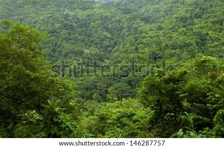 amazing endless expanse of lushish vivid tropical jungle, Costa Rica, Latin america - stock photo