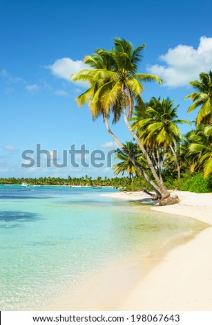 Amazing exotic island with beautiful tall palm trees, white sandy beach and azure water - stock photo