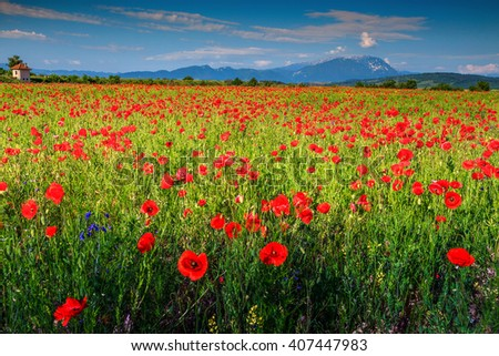 Amazing field of red poppy blooming in early summer day and Piatra Craiului mountains in background,Transylvania,Romania,Europe - stock photo