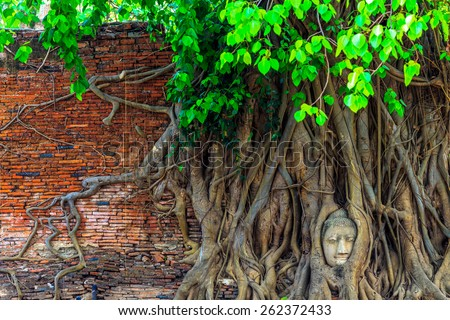 Amazing in Thailand, Head of Buddha statue in the tree roots at Wat Mahathat temple, Phra Nakhon Sri Ayutthaya, Thailand. - stock photo