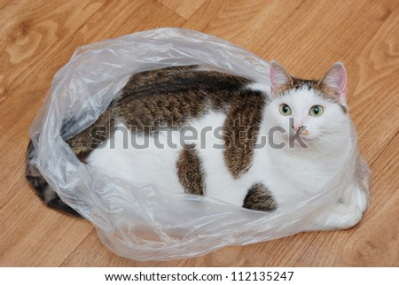 Amazing lady-cat lying in the plastic bag on the floor - stock photo