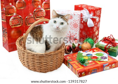 Amazing lady-cat sitting in the wicker basket among the Christmas presents and toys - stock photo