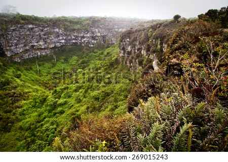 Amazing landscape of Twin Craters, Los Gemelos, mysterious mossy forest in Santa Cruz island, Galapagos, Ecuador - stock photo