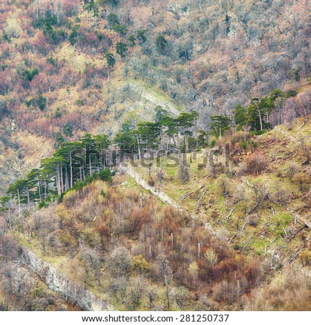 amazing misty forest mountains. Pine trees of the hill - stock photo