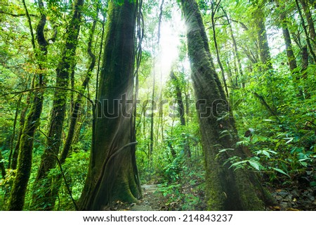 Amazing morning at deep rainforest with tropical plants and sunbeams. Nature landscape and travel background. Thailand - stock photo
