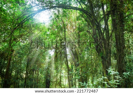 Amazing morning at deep rainforest with tropical plants and sunbeams. Nature landscape and travel background. Doi Inthanon park, Thailand - stock photo
