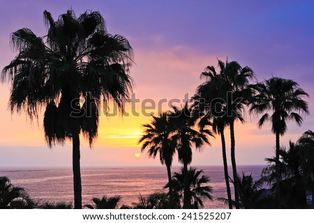 Amazing ocean sunset with palm trees.  - stock photo