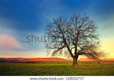 amazing of tree on the sunset - stock photo
