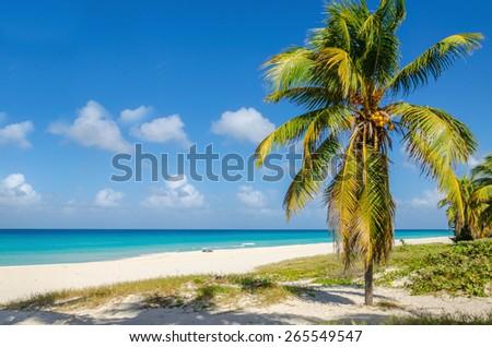 Amazing sandy beach with coconut palm tree, azure Caribbean Sea and blue sky, Caribbean Islands - stock photo