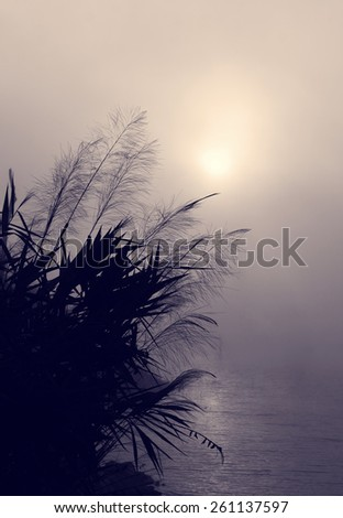 Amazing scenery of Vietnam village in morning at sunrise, silhouette of wild grass beside lake, sun go up make abstract landscape - stock photo