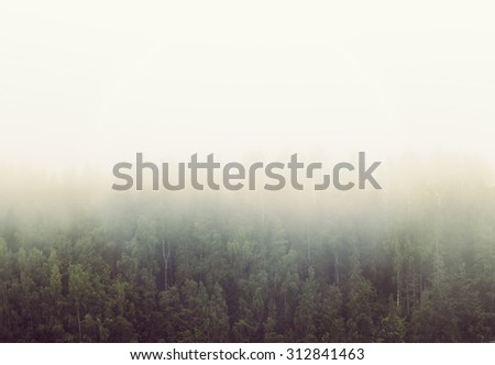 Amazing scenery on a cold and foggy morning. A forest is filled with mist. Image has a vintage effect applied. - stock photo