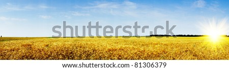 Amazing summer landscape with cereals field and fun sun. - stock photo