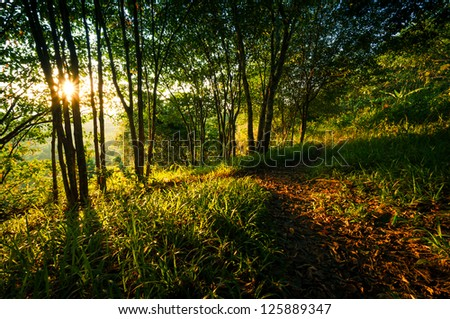 Amazing sunset scene in the forest - stock photo