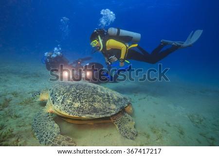Amazing Turtles from Abu Dabbab, Red Sea, Egypt - stock photo