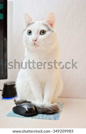Amazing white cat sitting near a computer mouse - stock photo