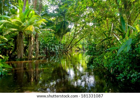 Amazon Jungle  Yasuni, Ecuador - stock photo