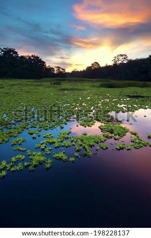 Amazon Rainforest, Peru, South America  - stock photo