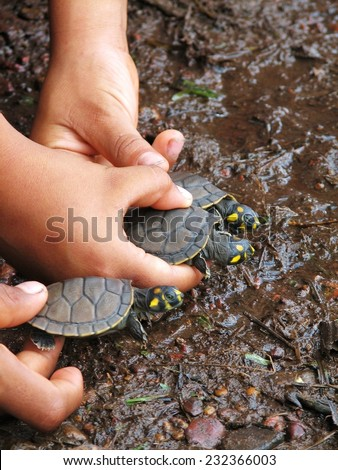 Amazon turtle conservation - stock photo