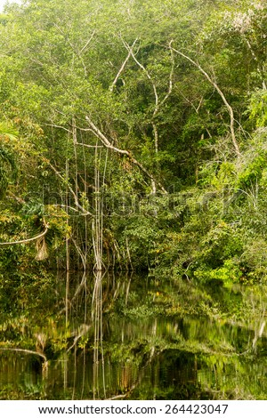 Amazonian jungle theme with dense vegetation in bright daylight - stock photo