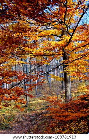 Amber Trees in Autumn - stock photo