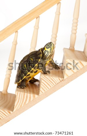 Ambitious turtle moving up with perseverence on a staircase or ladder - stock photo