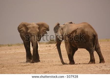 Amboseli elli boys 1,04 - stock photo