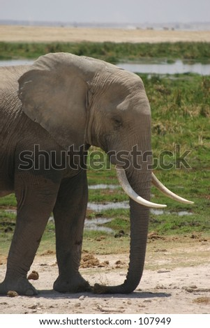 Amboseli elli boys 11,04 - stock photo
